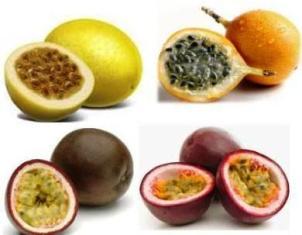 Manfaat Buah Markisa Untuk Kesehatan Tubuh dan Kecantikan Kulit