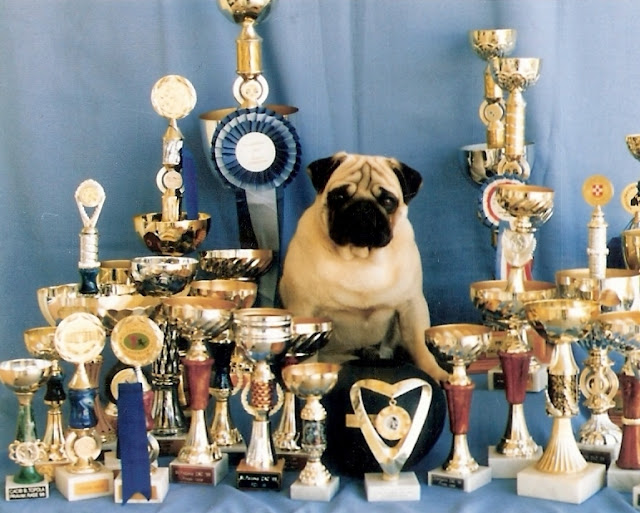 Maurice's father, sitting proudly, with his awards.