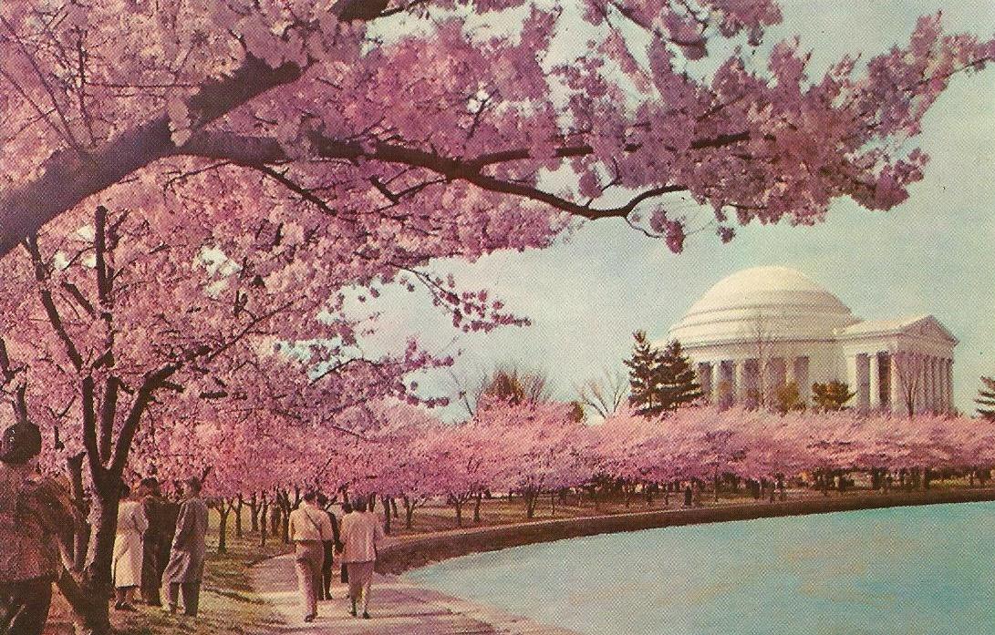 Vintage Travel Postcards Jefferson Memorial Washington Dc