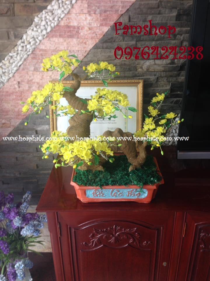 Goc bonsai cay hoa mai tai Trung Hoa