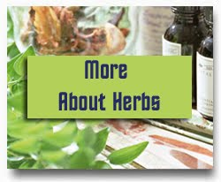 Learn about Herbs