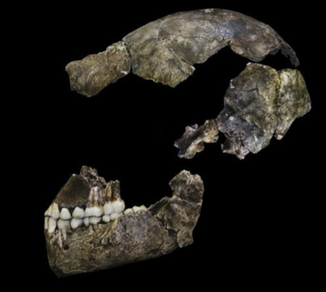Homo naledi said to be only 250,000 years old