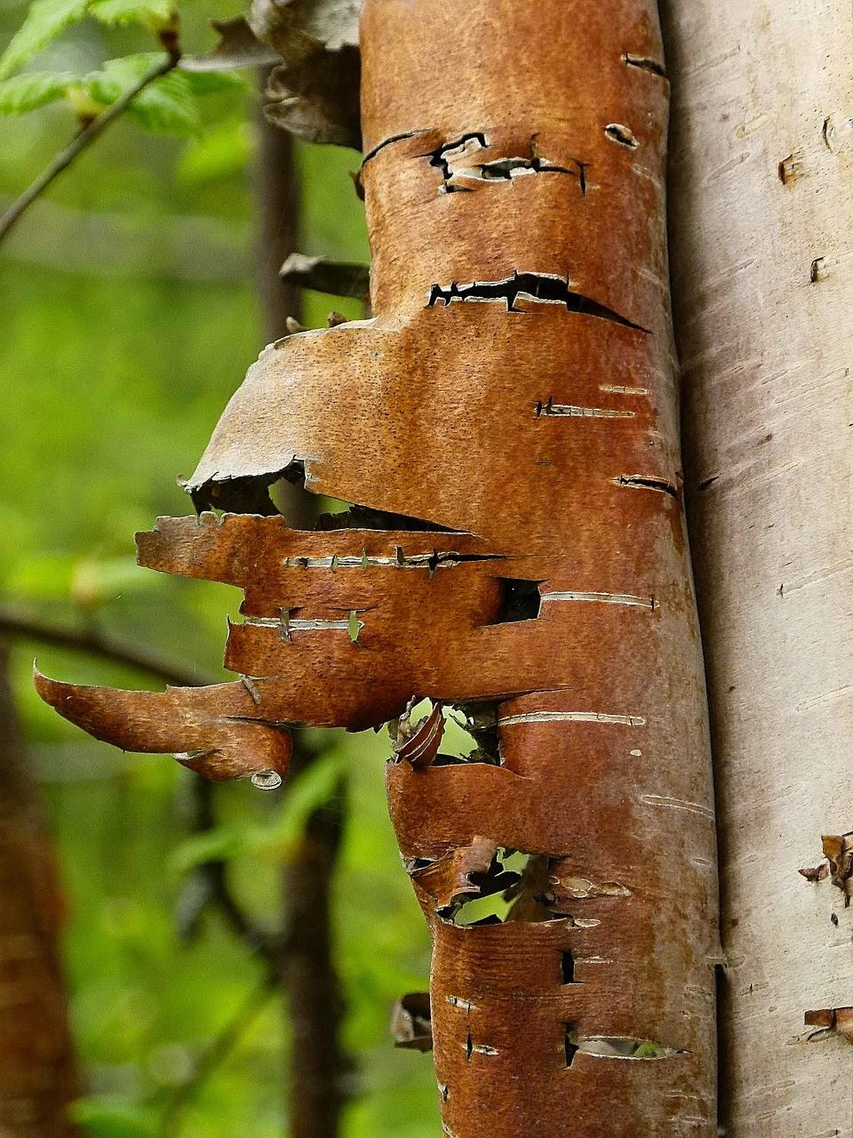 Decorer Avec Des Ecorces De Bois De Bouleau