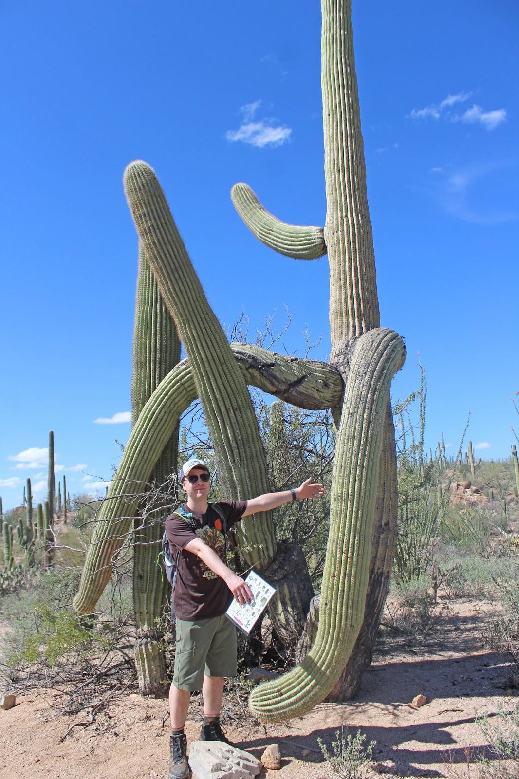 saguaro national park day trip 14
