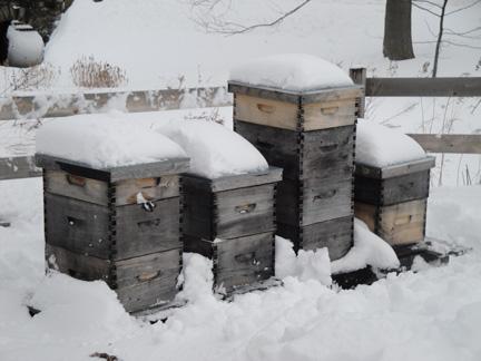 Μεγάλη ψηφοφορία! Πόσες απώλειες μελισσιών είχατε το φετινό Χειμώνα;