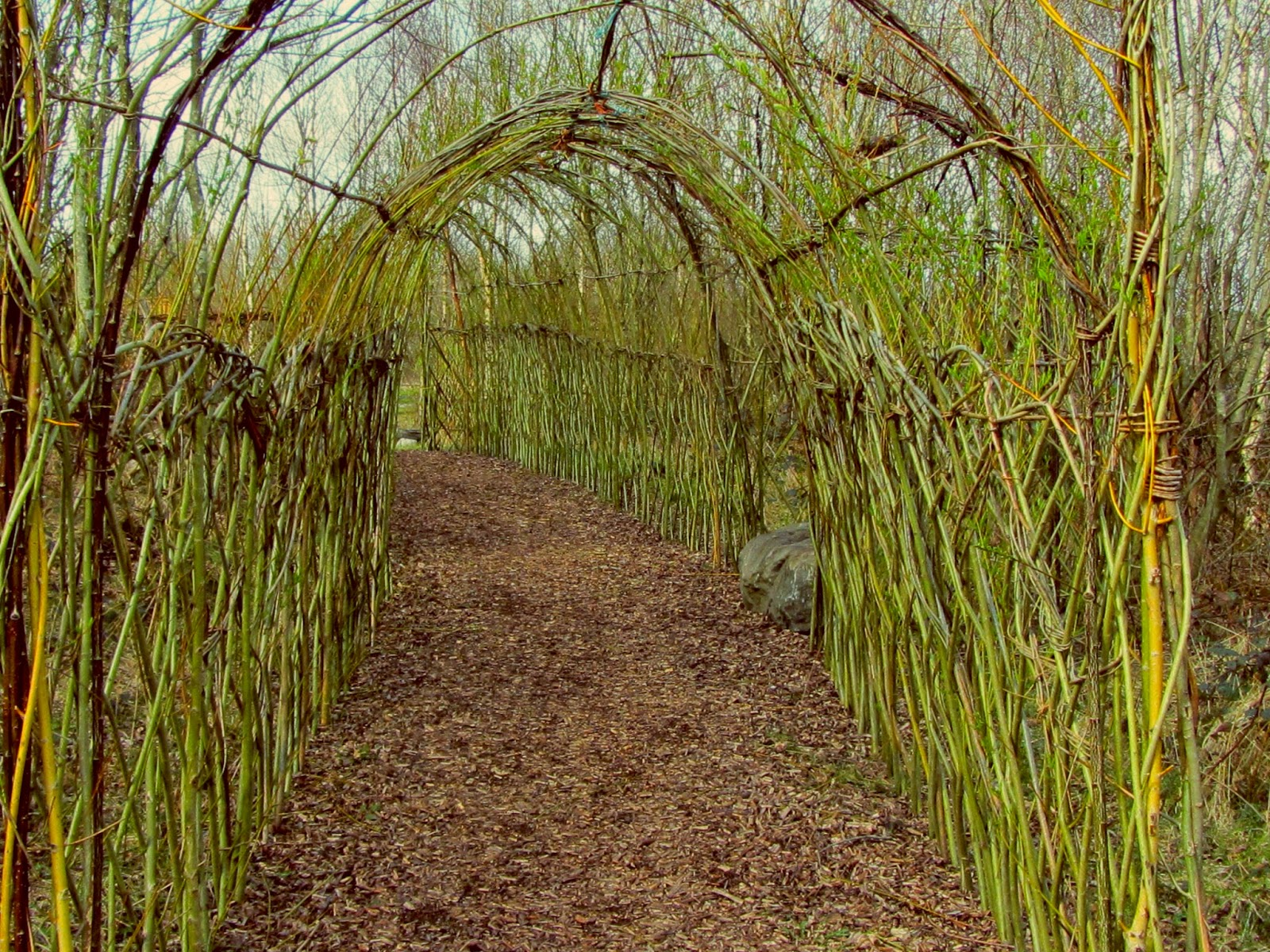 Willow Tunnel Lough Boora