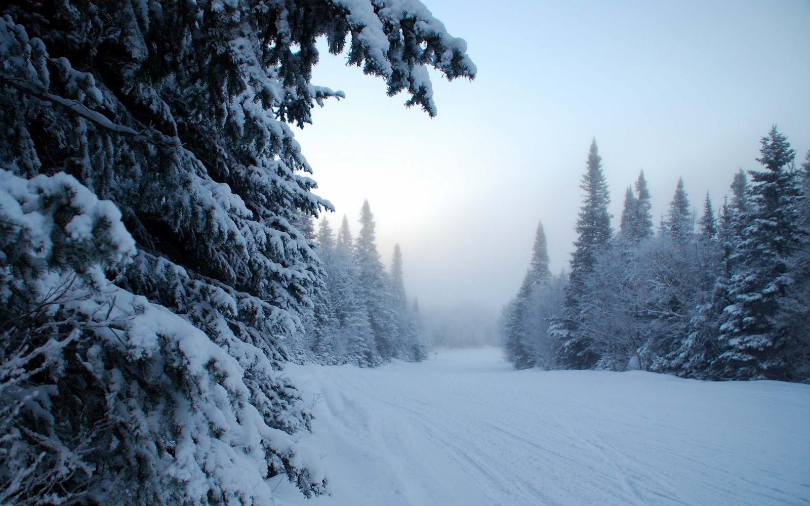 s1600 winter achtergronden winter - photo #32