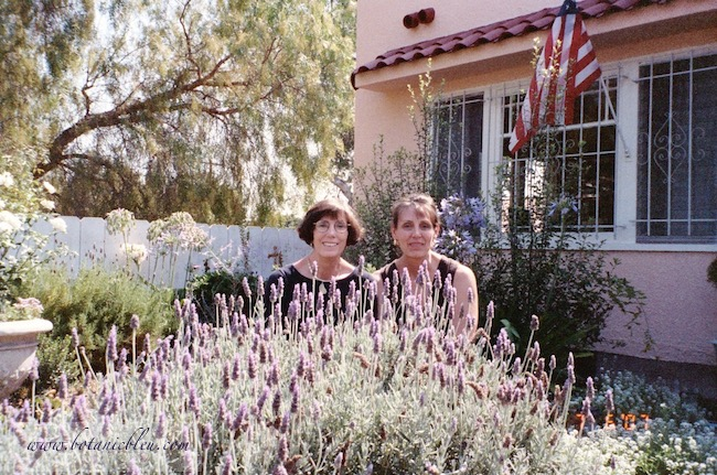 Spanish lavender grows well in southern California gardens