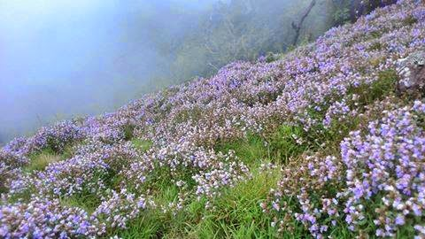 whicha are the spots in munnar where you can see neelakurinji flowers