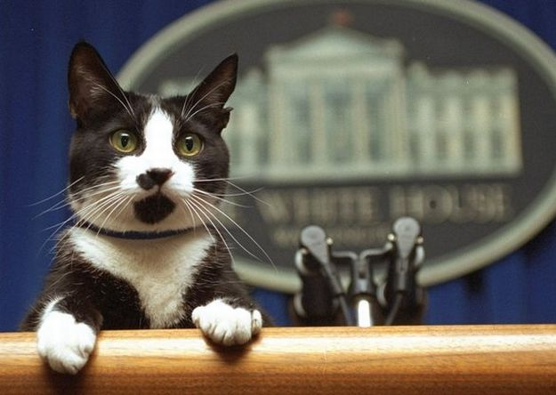 Imágenes Día del Gato Internacional World Cat Day Socks Bill Clinton Casa Blanca
