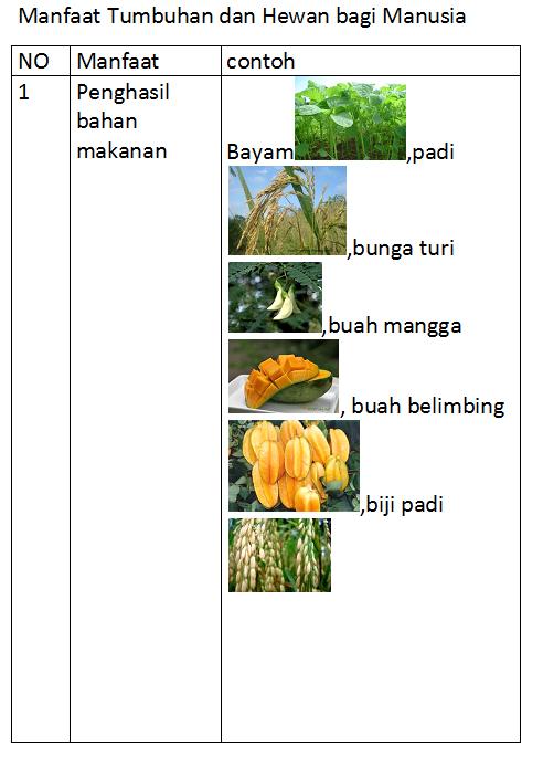 Manfaat Hewan Dan Tumbuhan : manfaat, hewan, tumbuhan, Semesta, Hati:, MANFAAT, TUMBUHAN, HEWAN, MANUSIA, (KARYA, AZHAR)