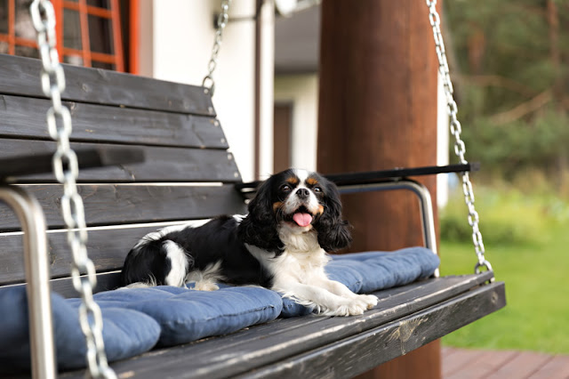 Sound advice to read while relaxing, like this Cocker Spaniel on a swing