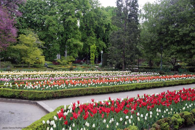 Tulipanes en el real jard n bot nico de madrid for Jardin botanico 2016