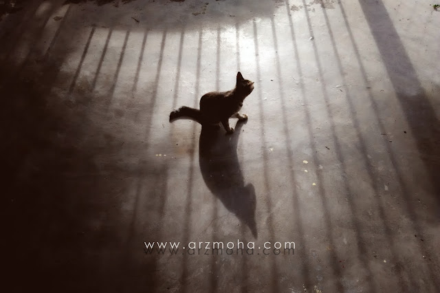 cat and shadow, tips photography, wordless wednesday, refleksi, reflection, teknik ambil gambar refleksi, bayang-bayang,