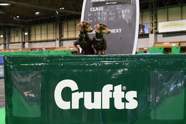 Jacob & Bruno at Crufts?!