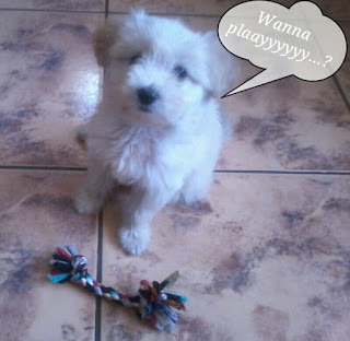 Fluffy my puppy - buffyandrenza.blogspot.com