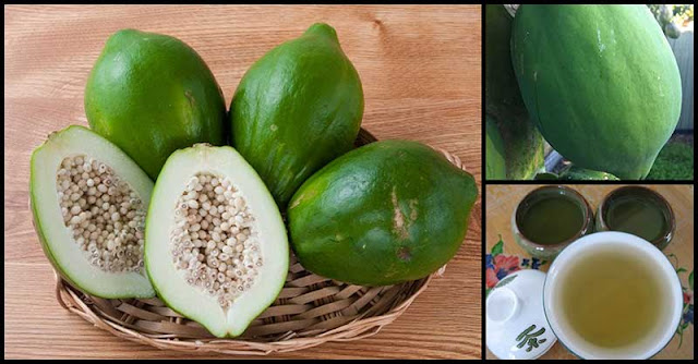 Help Deal With Gout Symptoms By Drinking Green Papaya Tea