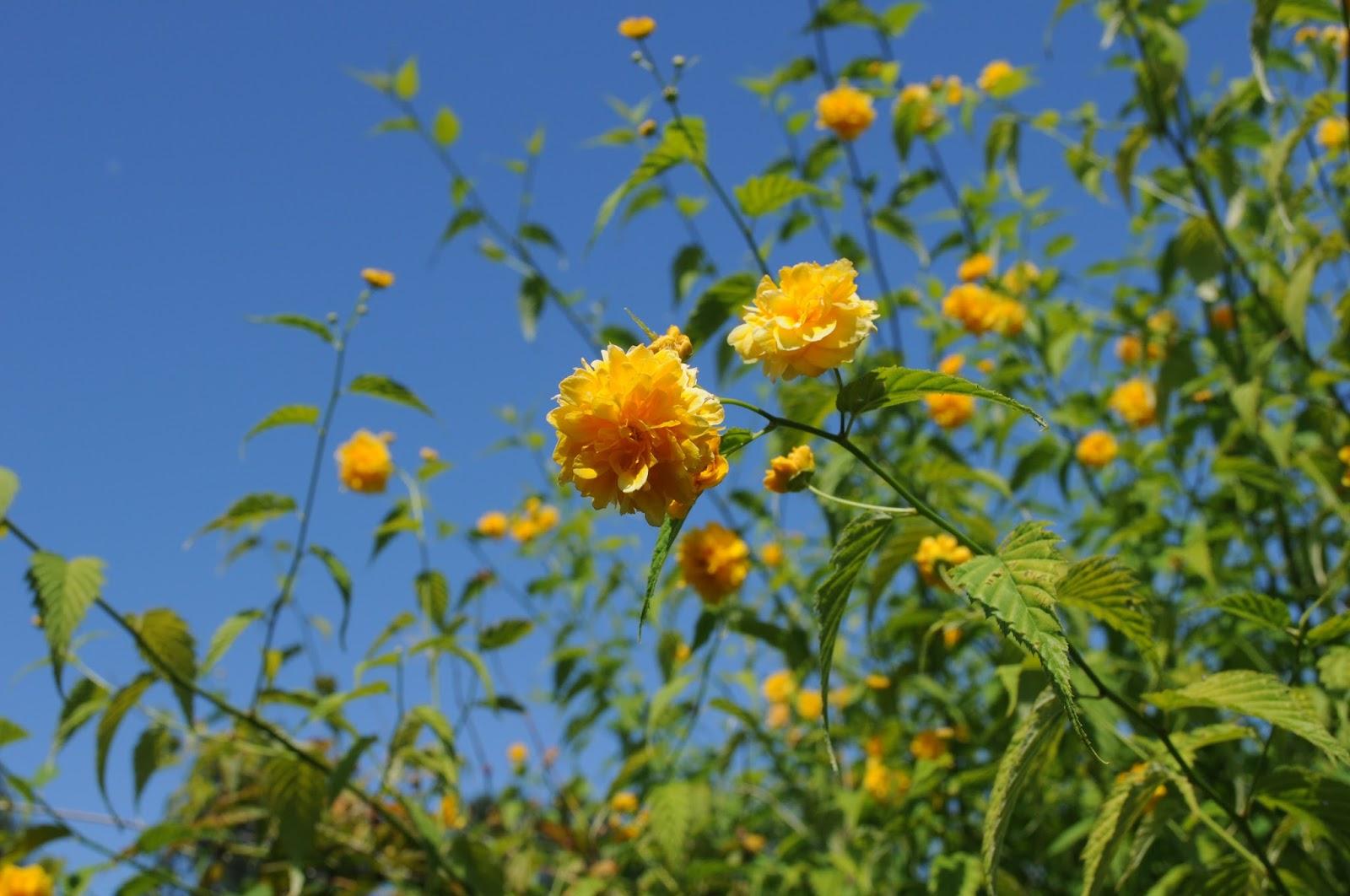 Fiori Da Giardino In Montagna giardino di montagna | altevite
