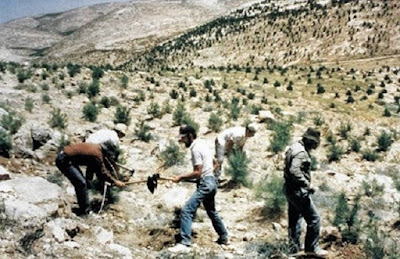 Tanam Pohon Gharqad Pohon Akhir Zaman Yahudi