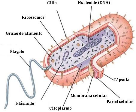 Aprendiendo Biología Agosto 2016