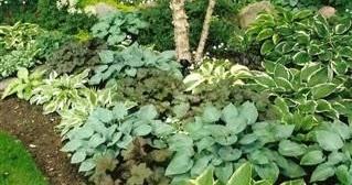 Gardening Tips For Beginners Designing A Shady Garden