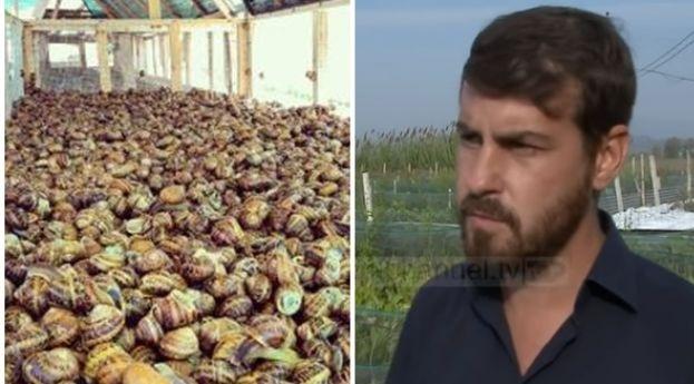 Albanian psychologist Ervib, who cultivates snails: I sell 4-5 euros the kilogram