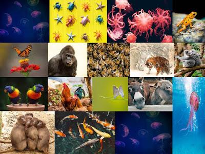 Unknown Amazing Facts In Hindi । अनजाने रोचक तथ्य हिंदी में (ANIMAL & OTHER ORGANISM - जानवर और अन्य जीव)
