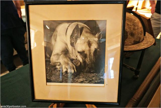 Foto del Perro Secuestrado de Hammond
