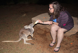 Feeding a joey, Noonbah Station, Australia