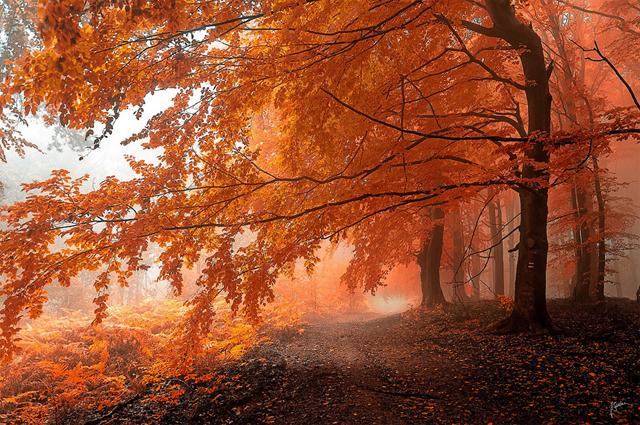 Karpatlarda bulunan güzel bir ağaç