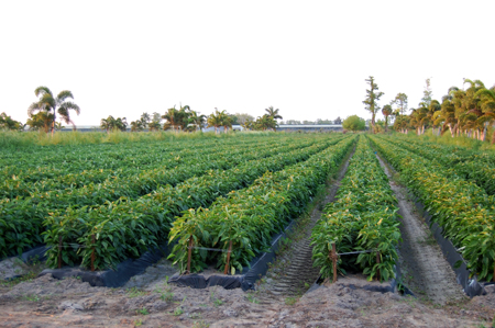 The Florida Land Report For Sale Florida Ag Reserve Farm