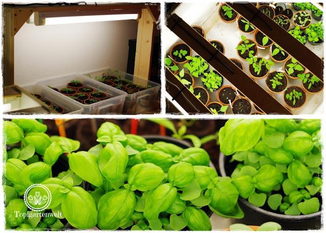 Gartenblog Topfgartenwelt Aussaat Anzucht Grow-Box: Vorteile einer Anzuchtkiste perfektes Pflanzenwachstum durch Beleuchtung