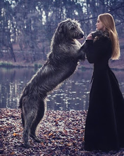 A grey Irish wolfhound on standing on its back paws with its front paws on a red-headed woman in a black dress. There are leaves on the ground and water and trees in the background.