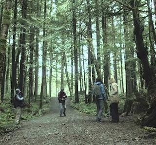 la foresta dei suicid