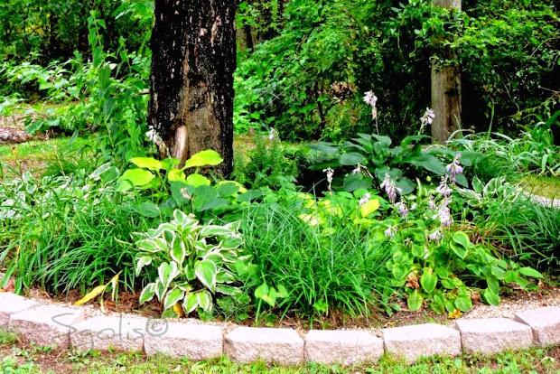 yard and garden secrets landscaping