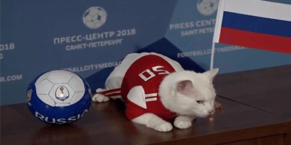 """القط الروسي """"أخيل"""" الذي يتوقع نتائج كأس العالم 2018 !!"""