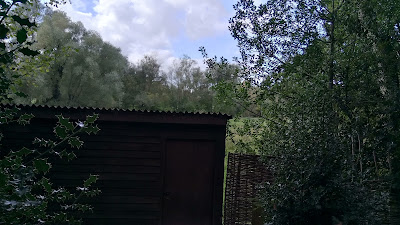 collection of textures, holly leaves, edge of corrugated iron, woven fence and a variety of trees.