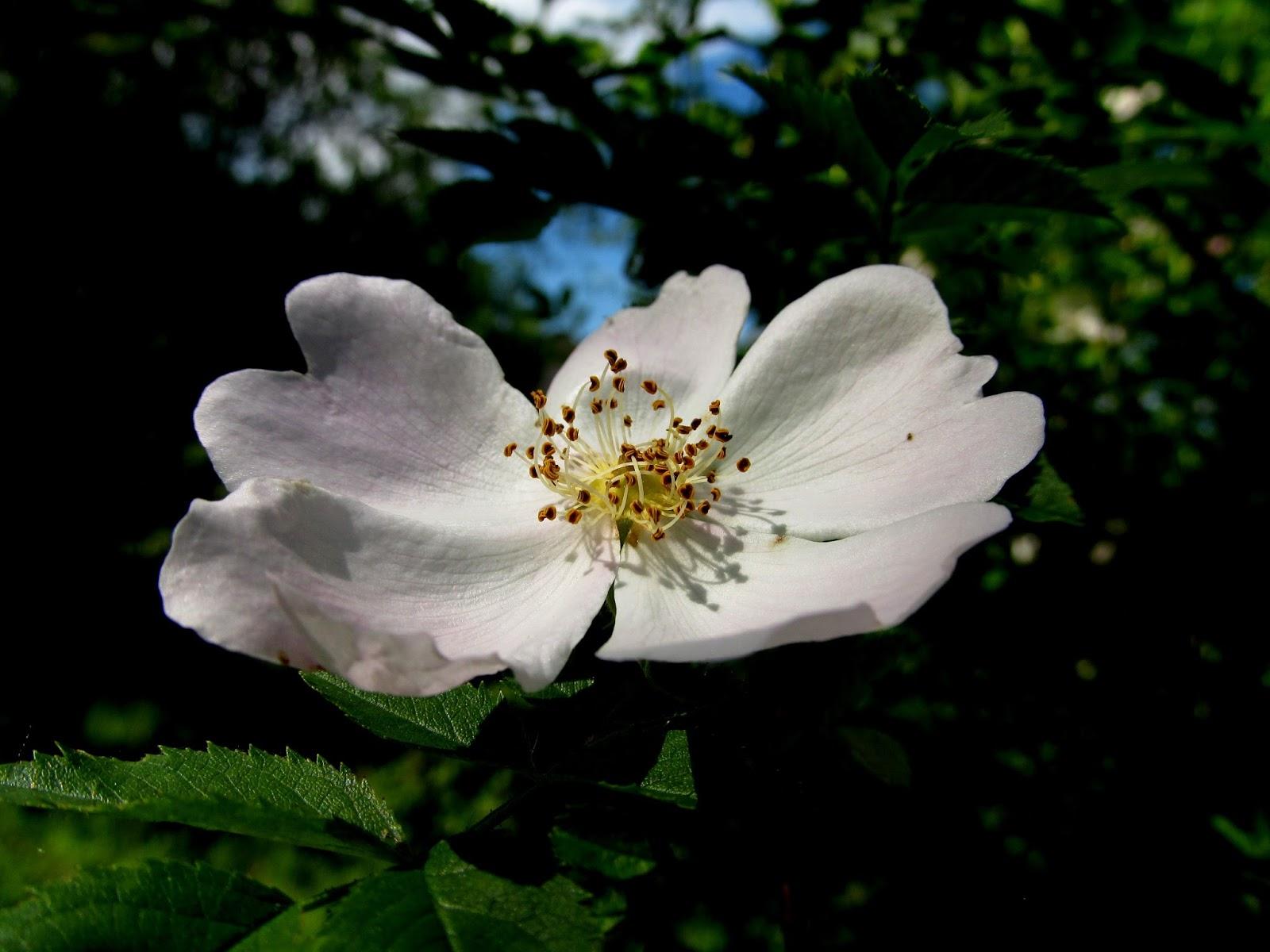 Moje Zaczytanie W Sobocie Z Poezją Dzika Róża