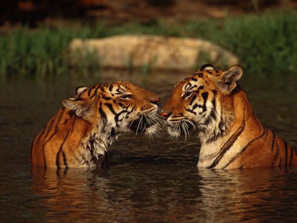 EOTW: WWF България на Междунароната изложба на котки
