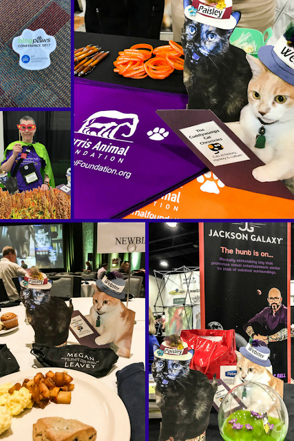 Collage of old SoLT and the Flat Cats at BlogPaws 2017