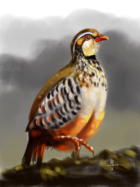 Barbary partridge bird painting by Artmagenta