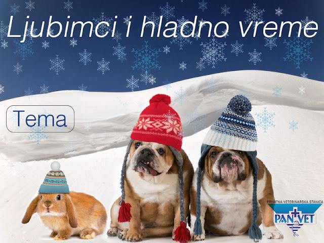 Ljubimci i hladno vreme - Panvet moj veterinar blog