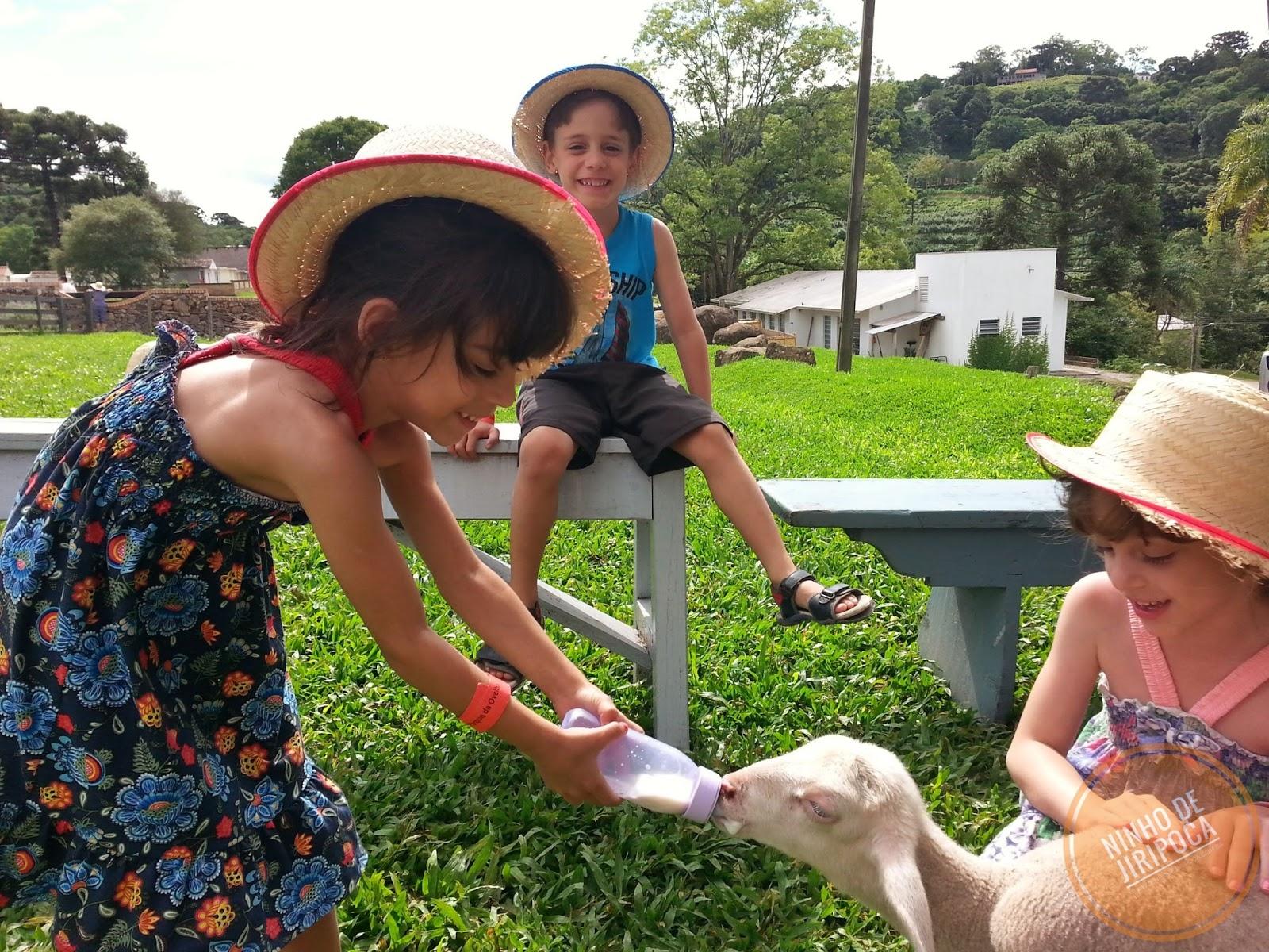 Amamentação de ovelhas na Casa da Ovelha em Bento Gonçalves