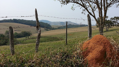 imagem no campo