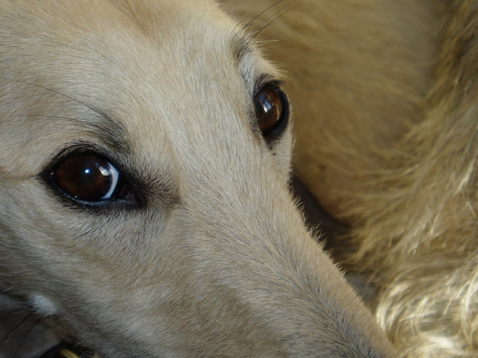 What Is It When A Dog Has Rapid Eye Movement