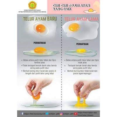gambar membantah isu telur palsu