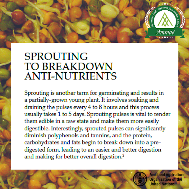 How come sprouting breaks down anti-nutrients?
