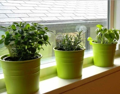Education And Tips For All The Way To Grow Cilantro Inside