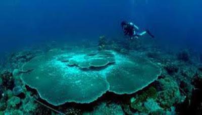 Bawah laut kepulauan Anambas