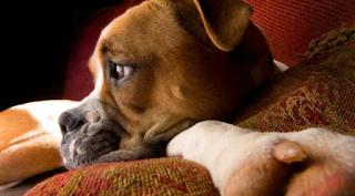 Τα σκυλιά ονειρεύονται, βλέπουν στο σκοτάδι και είναι σε θέση να κατανοήσουν μέχρι 250 λέξεις και χειρονομίες